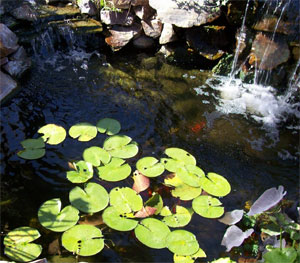 healthy pond How to Maintain a Healthy Pond with a Garden Pond Filter